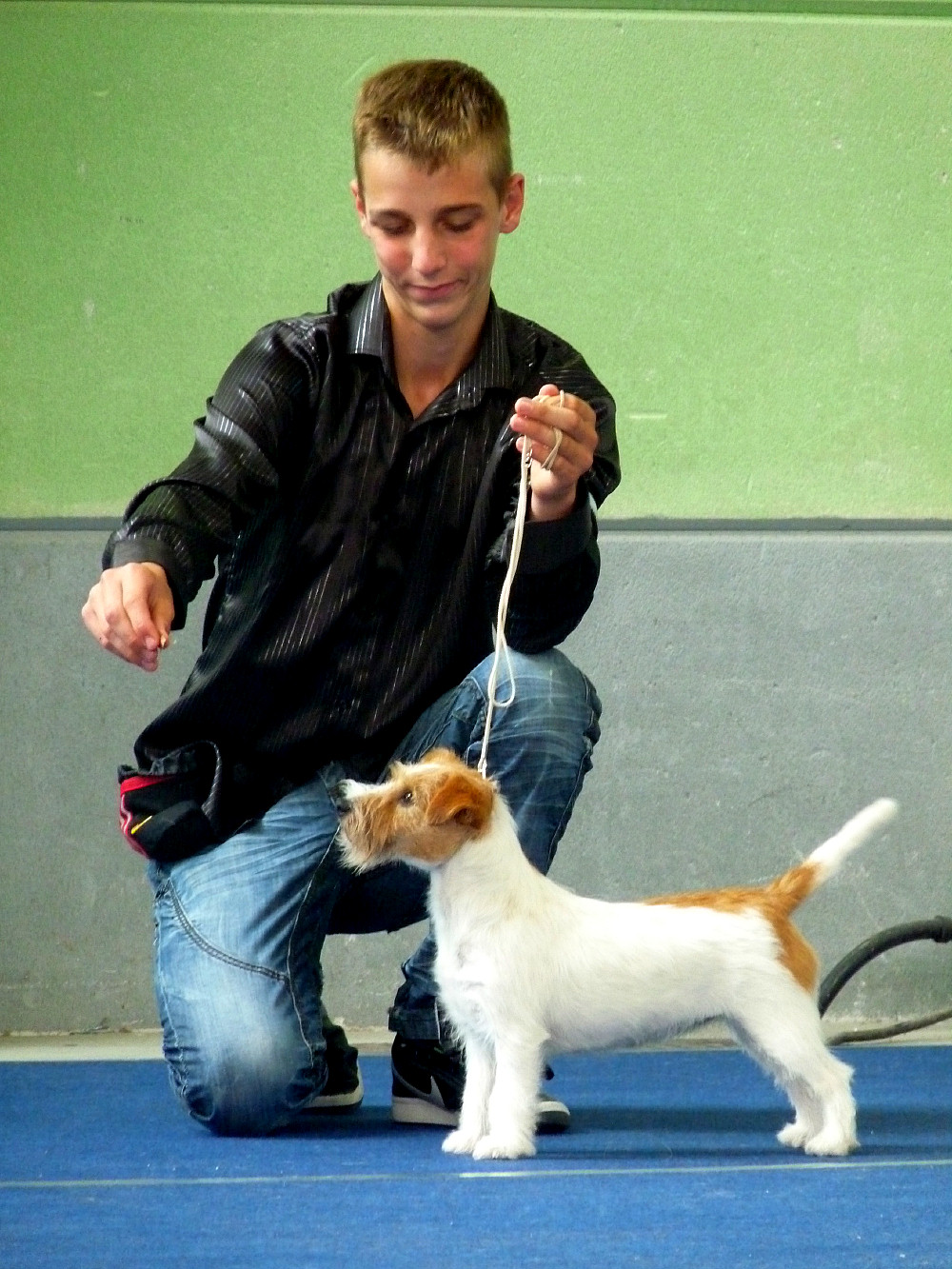 jack russell big